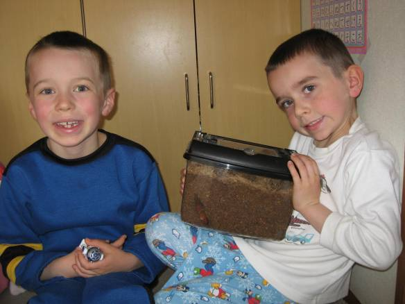 Austin and Ethan love checking on their pet rhinoceros beetle to see how he's getting along