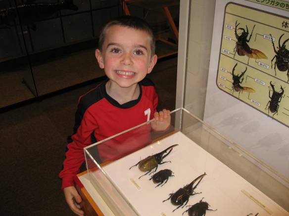 Ethan was ecstatic to find specimens of his all-time favorite Rhinoceros Beetle -- the Hercules Beetle