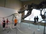 Admiring a T-Rex skeleton at the Tochigi Prefectural Museum